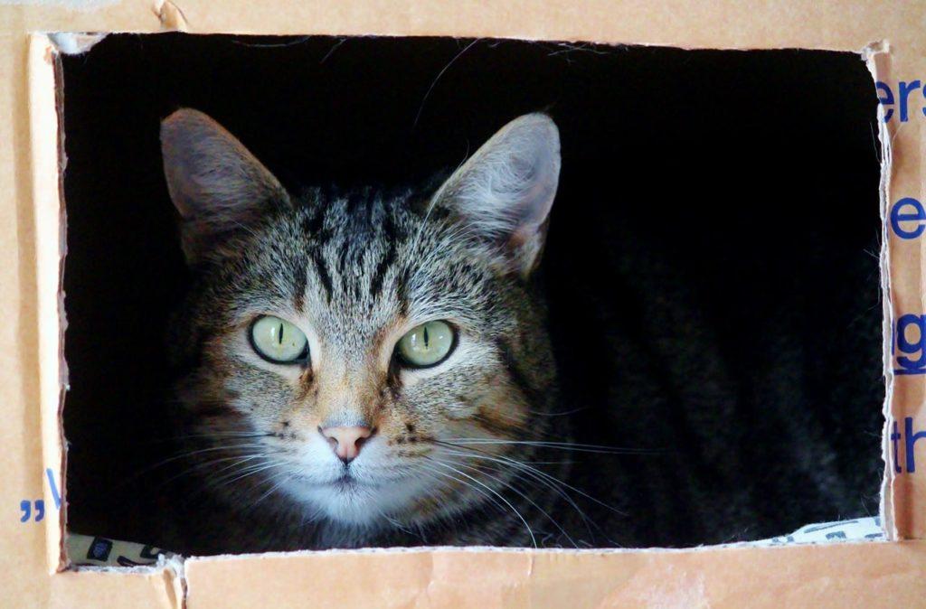 cat-829121_1280-min