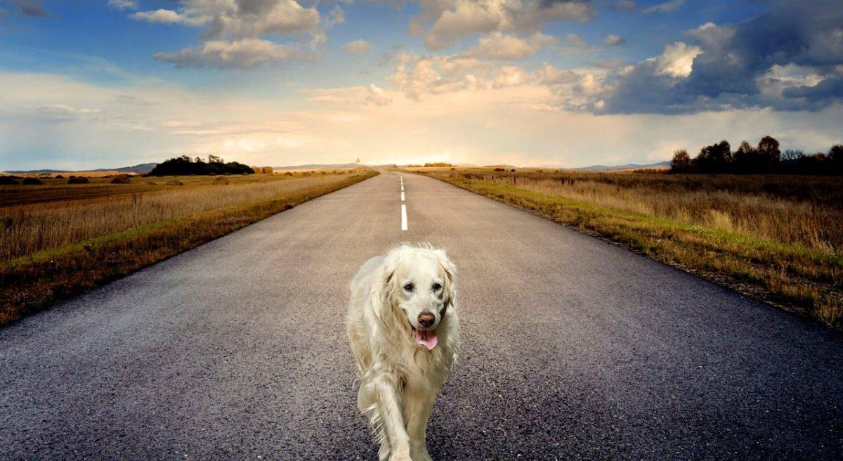 dog-3640784_1280-min