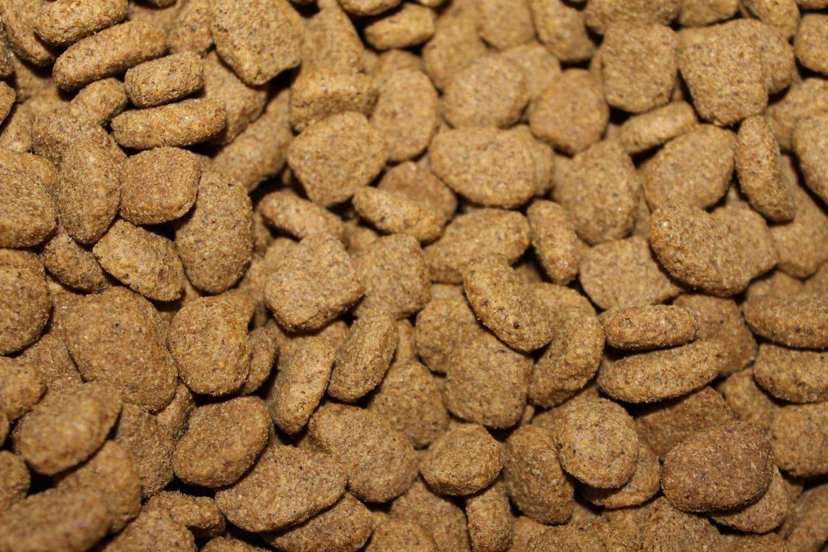 FDA-grain-3