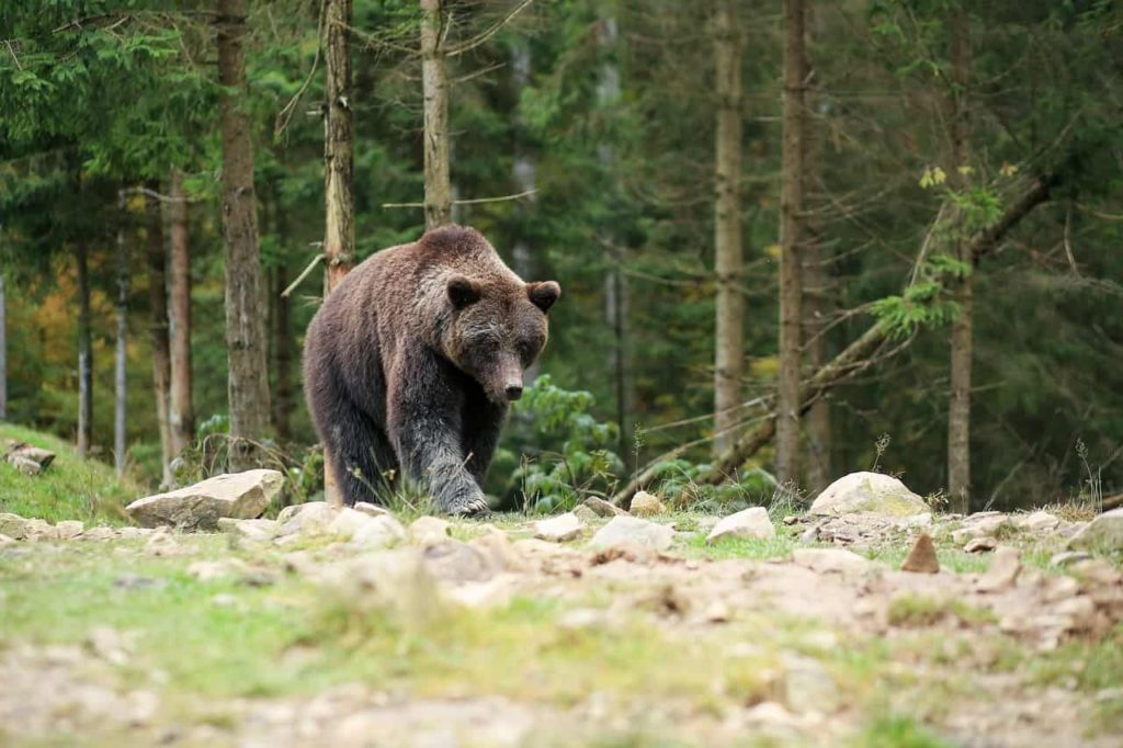 bear-3990913_1280-min