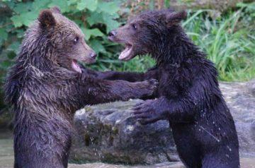 bear-1530798_1280-min-min