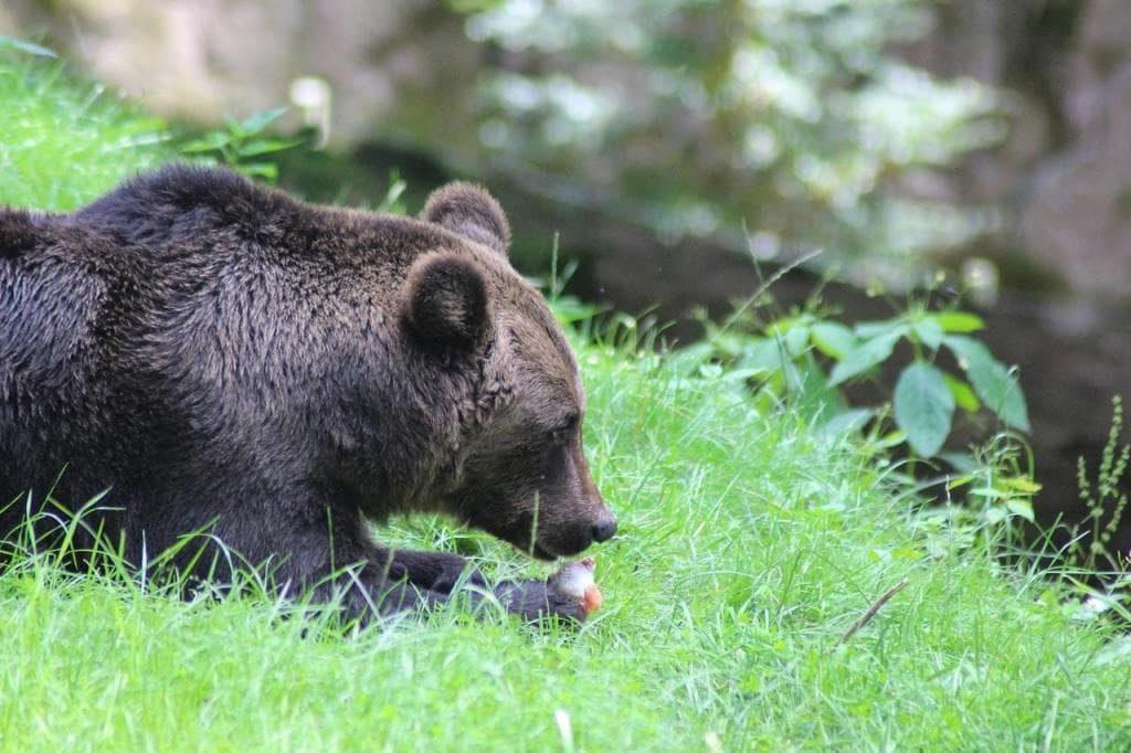 bear-2615322_1280-min-min