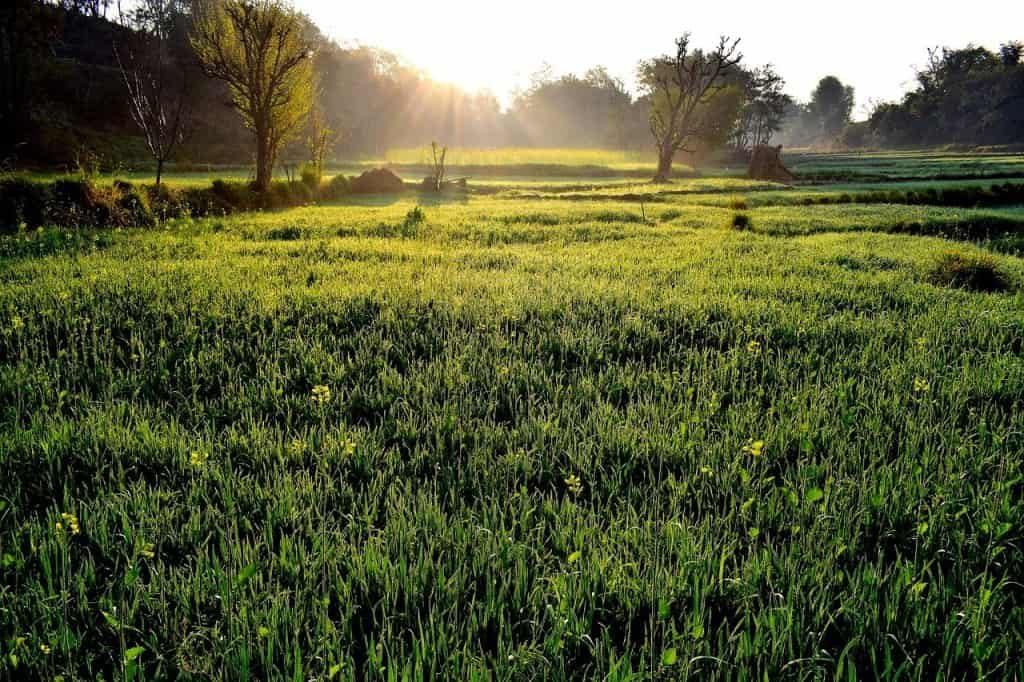 grass-3166711_1280-min