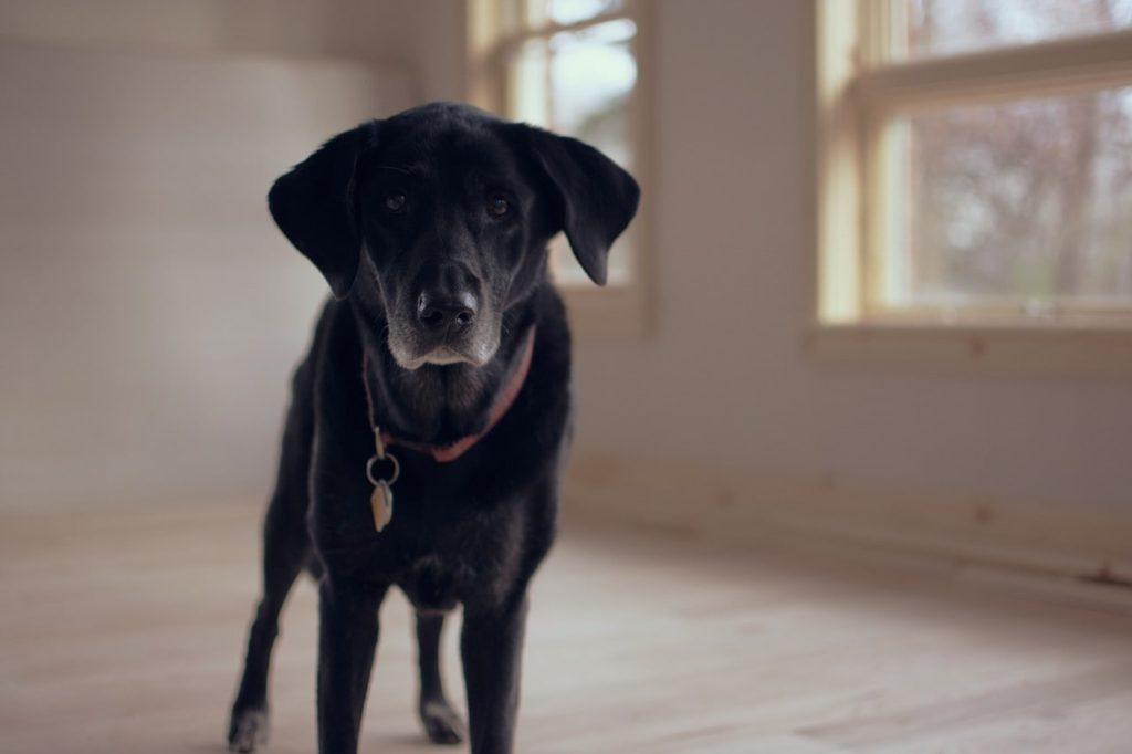 senior-dog-1149760_1280-min-1024x682