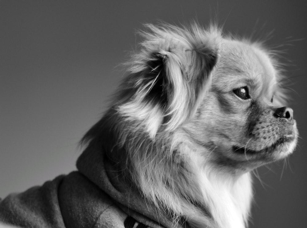 adorable-animal-animal-photography-2528553-min
