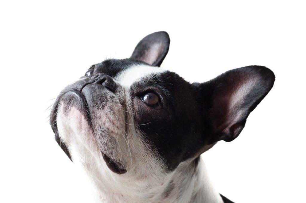 dog-4465690_1280-min