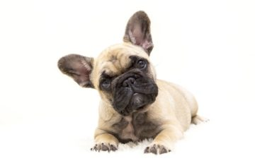 dogs-4716738_1280-min