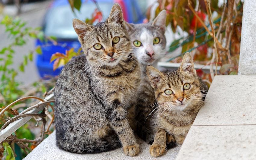 photo-of-three-cats-749212