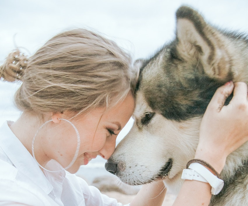 a-beautiful-dog-breed-with-a-thick-coat-3671235-min