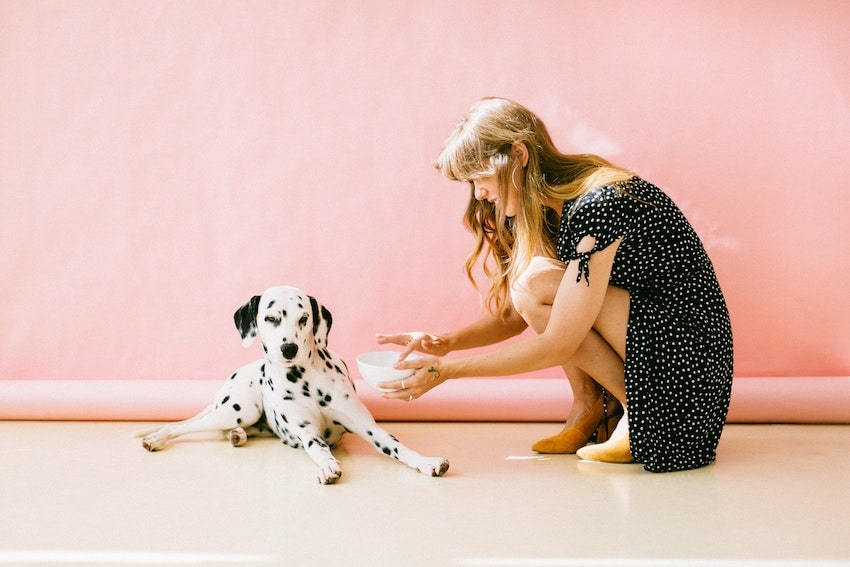 white-and-black-dalmatian-dog-sitting-in-front-of-woman-near-3297502-min
