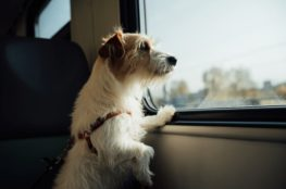 dog-train1
