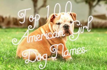 Top-100-American-Girl-Dog-Names-1024x682-1 (1) (1)