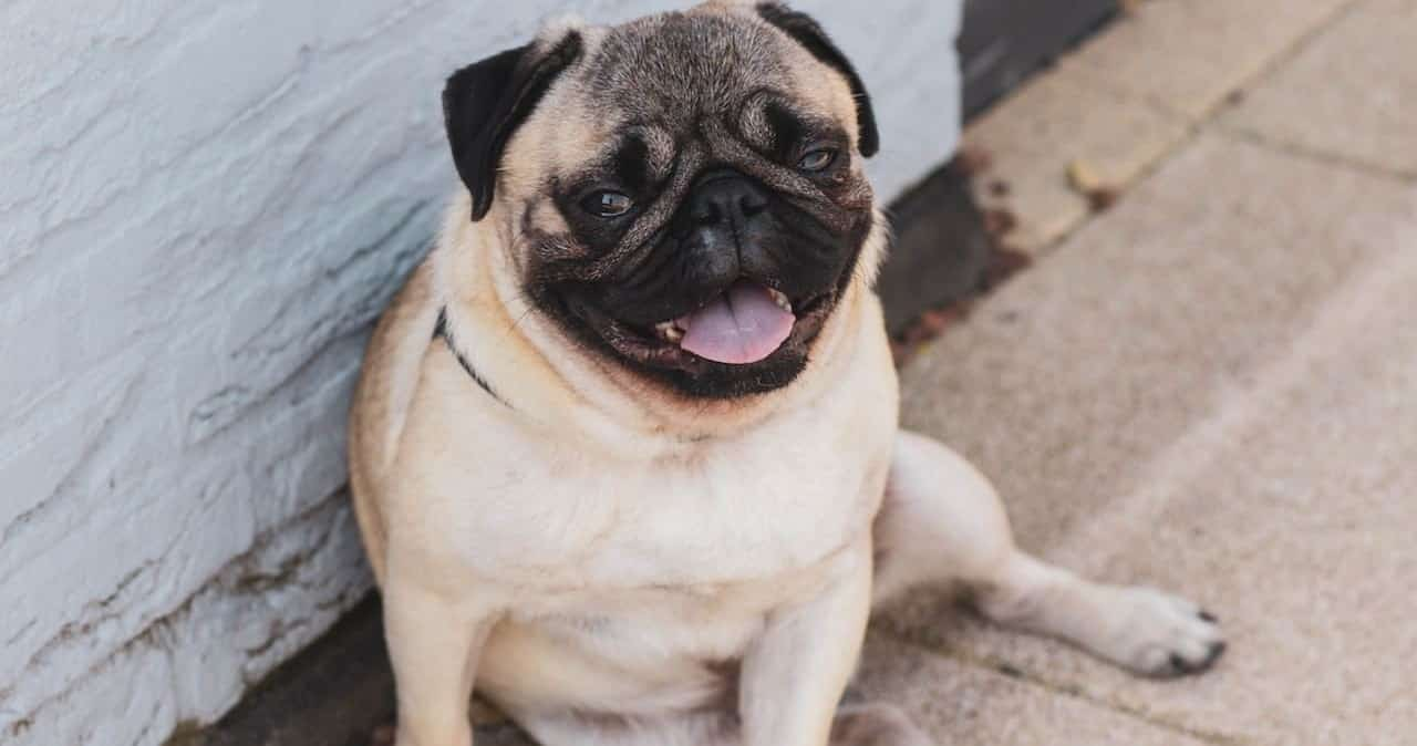 adorable-animal-breed-1289557-min (1) (1)