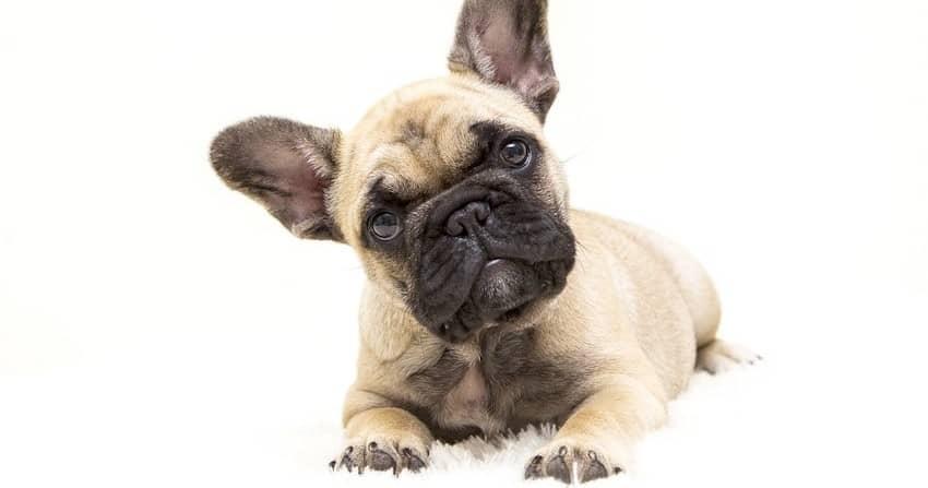 dogs-4716738_1280-min (1) (1)
