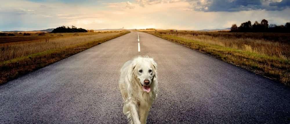 dog-road-image