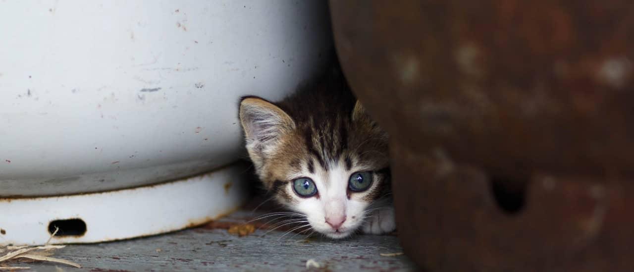 donation-cat01