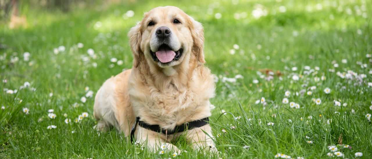 草原の犬2