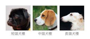 短頭犬種のイメージ画像