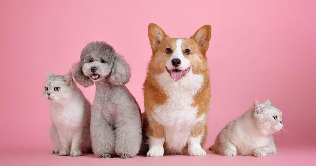 dog&cats image