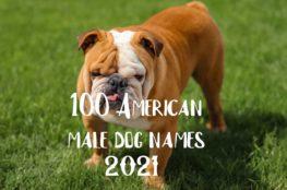 male dog image4