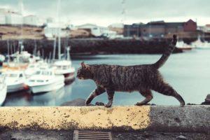 move cat