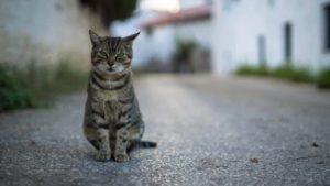lost-cat-top-image