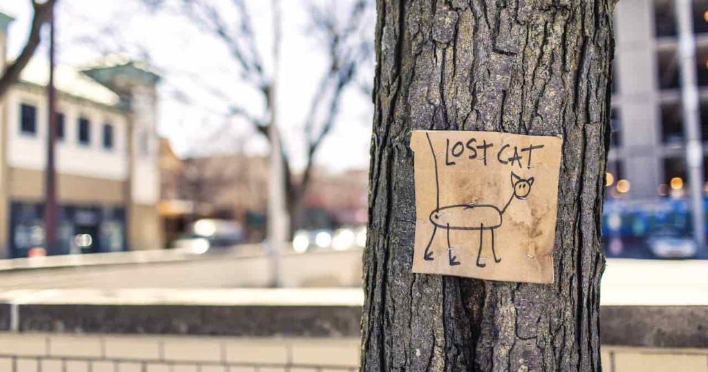 lost cat image