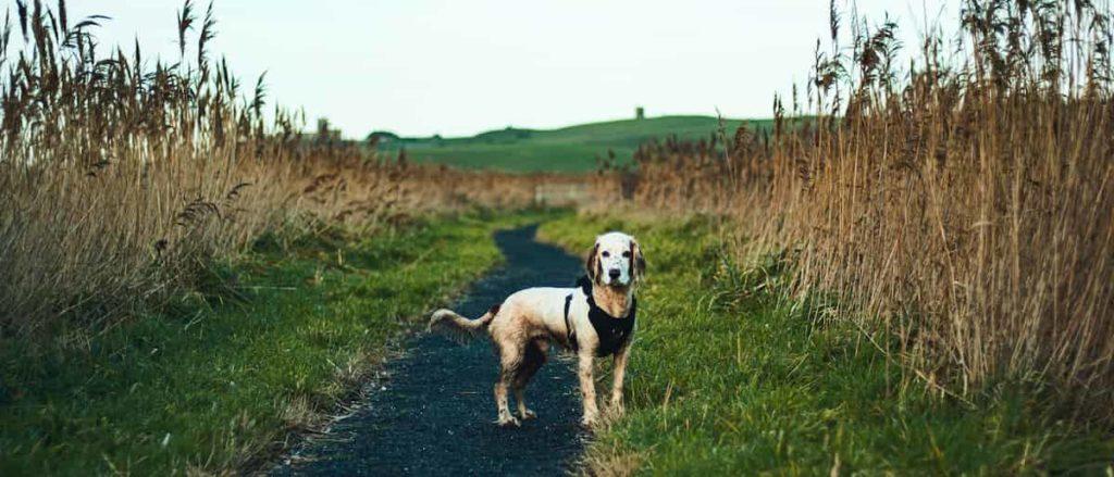 missing dog image