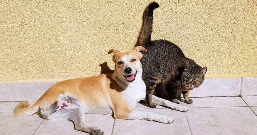 dog&cats