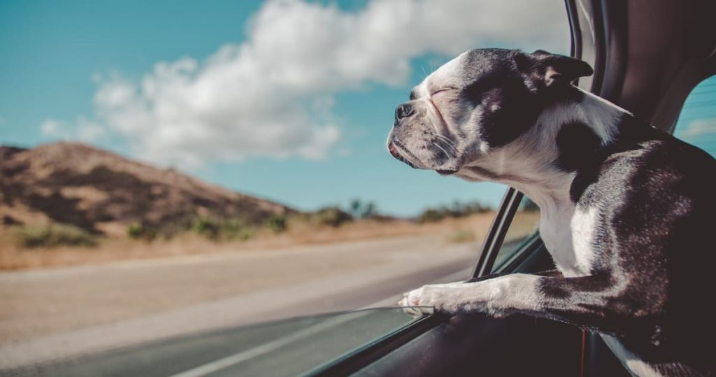 Dog peeking through the window