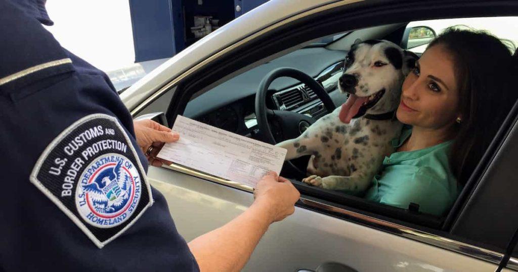 dogs in car04