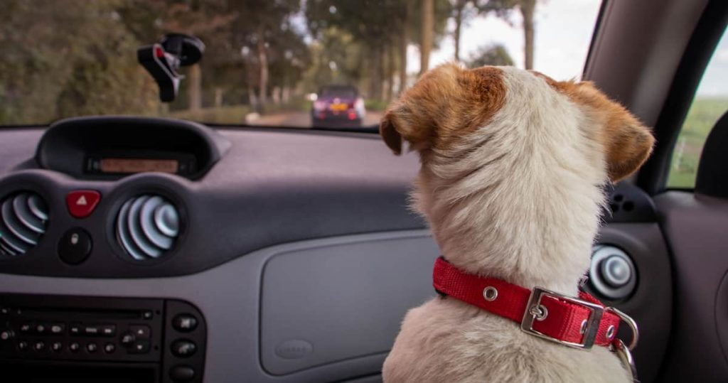 dog in car05